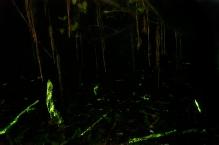 Bioluminescence_5_Ashwin