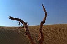 Desolate & Dead