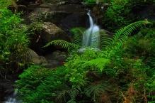 Rainforest Freshness