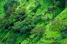 Green my world