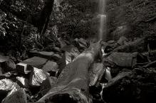 Log into Nature