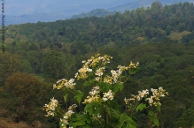 Wild Flowers and Mountain